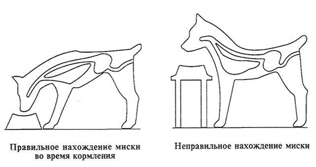 Подставка под миску собаке своими руками