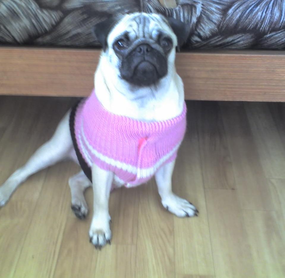 схема для вязания одежды для собак